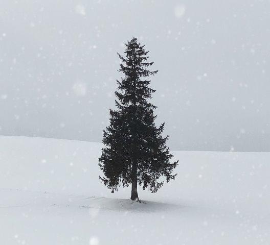 Repurpose your Christmas Tree_Photo by Seoyeon Choi on Unsplash