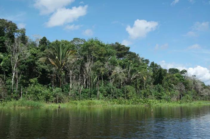 Amazon Rainforest in the Trocano Project Area of Borba, Brazil