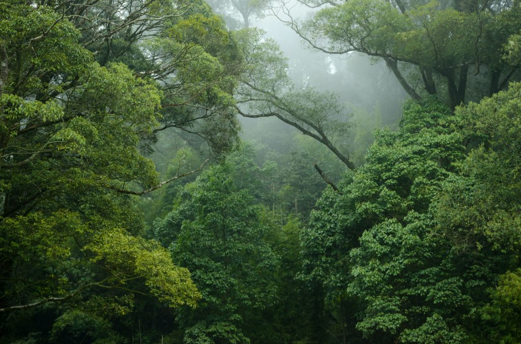 Rainforest with fog seeping through branches